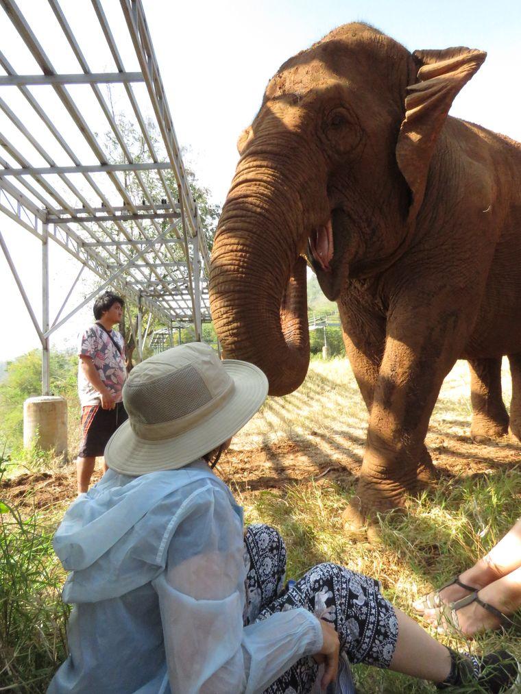 Mit Lek ein Interview zu führen, ist gar nicht so leicht: Ständig kommt ein Elefant dazwischen...