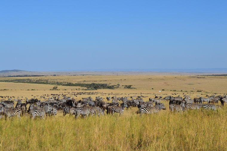"""Das Naturschutzgebiet Masai Mara in der Serengeti in Kenia war Kulisse für den Film """"Jenseits von Afrika"""""""