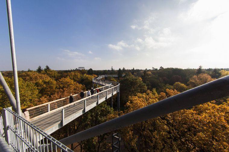 Im September 2015 eröffnete der erste Baumkronenpfad Brandenburgs.