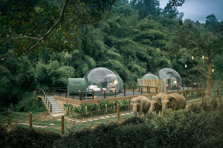 Blick auf die Dschungel-Bubble-Suiten bei Tag.