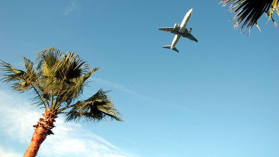 Ein Flugzeug fliegt über Palmen