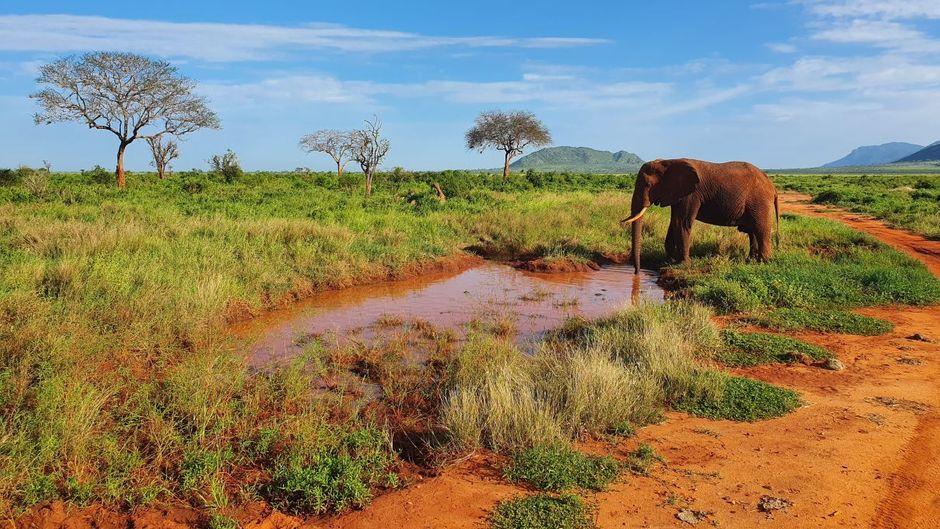 Der Tsavo-East-Nationalpark ist für ein Jahr günstiger zu besuchen.