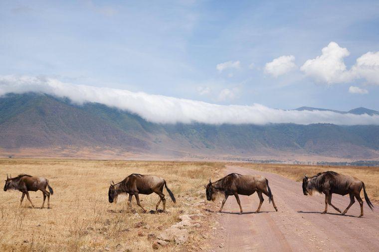 Wer nach Tansania reist, erlebt Naturreichtum – im Serengeti-Nationalpark geht es auf die Suche nach den Big Five Elefant, Löwe, Leopard, Büffel und Nashorn. Im Blick: Afrikas höchster Berg, der Kilimandscharo. Vor der Küste liegen tropische Inseln wie Sansibar.