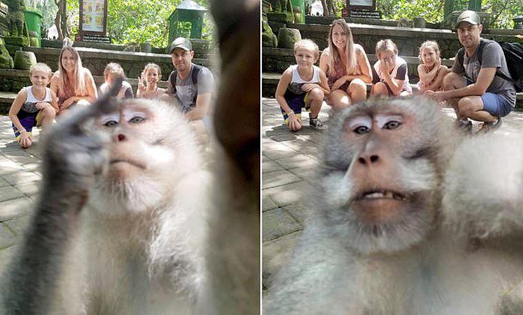 Auf einem der Schnappschüsse sieht es tatsächlich so aus, als würde der Affe den Mittelfinger heben.