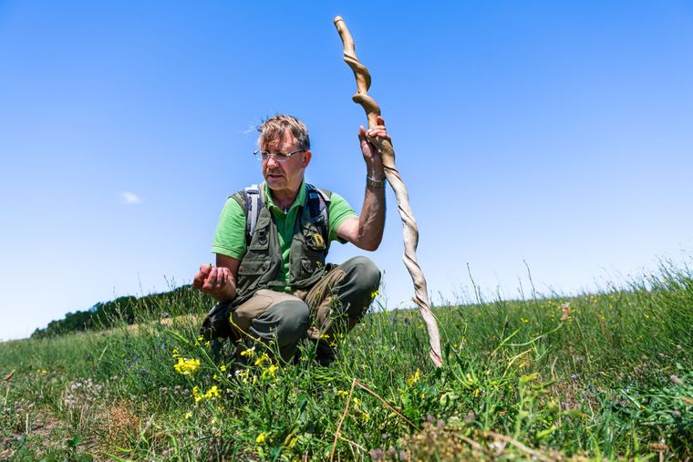Bei René Geyers Kräuterwanderungen durch die Zicker Berge bleibt kein Gewächs unentdeckt