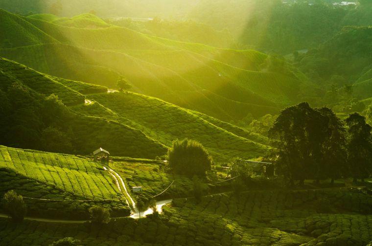 Malaysia erstreckt sich über Teile der malaiischen Halbinsel und die Insel Borneo. Es ist bekannt für Regenwälder, Strände sowie die vielfältigen kutlurellen Einflüsse, auch aus China, Indien und Europa.