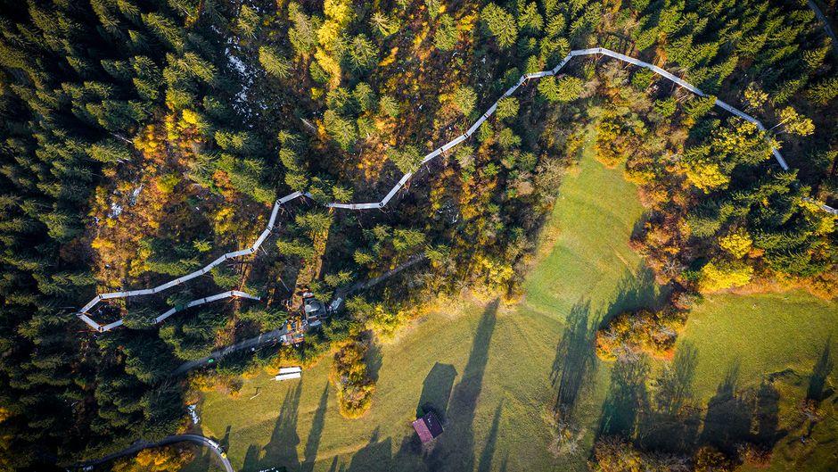 Der längste Baumwipfelpfad ist über 1,5 Kilometer lang.