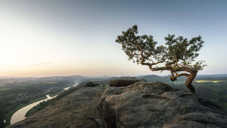 Eine einsame Kiefer auf dem Lilienstein in der Sächsischen Schweiz.