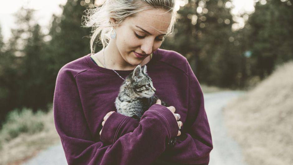 Mit Katzen kuscheln und dabei Geld verdienen? Eine Tierklinik in Dublin macht's möglich. (Symbolbild)