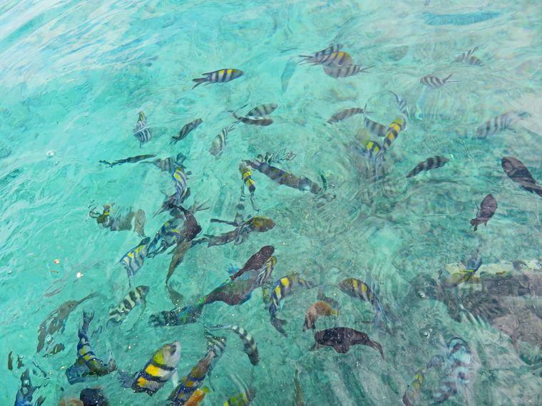 Fische im Wasser um die Derawan-Inseln.