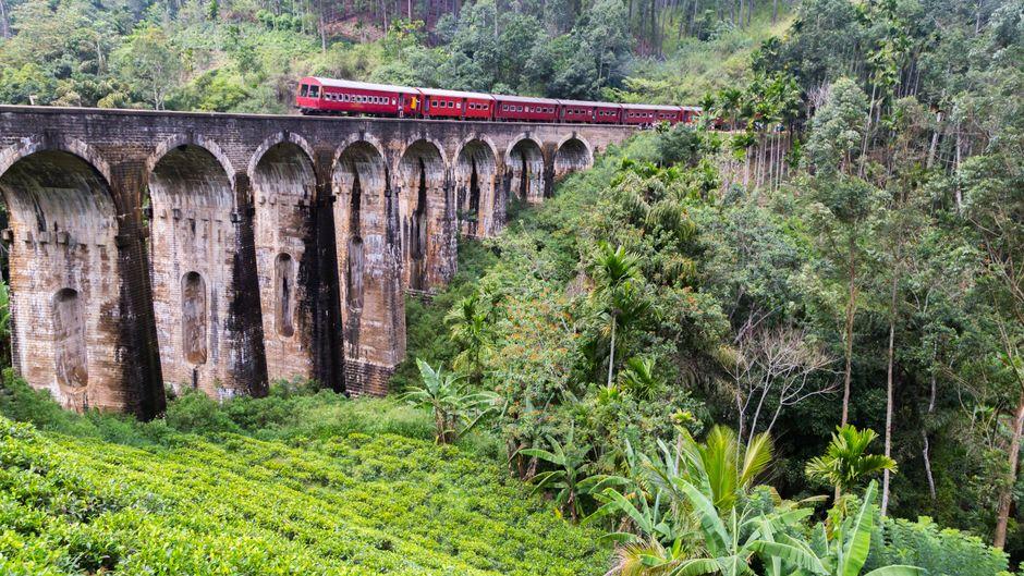 Zug durch den Dschungel in Sri Lanka.
