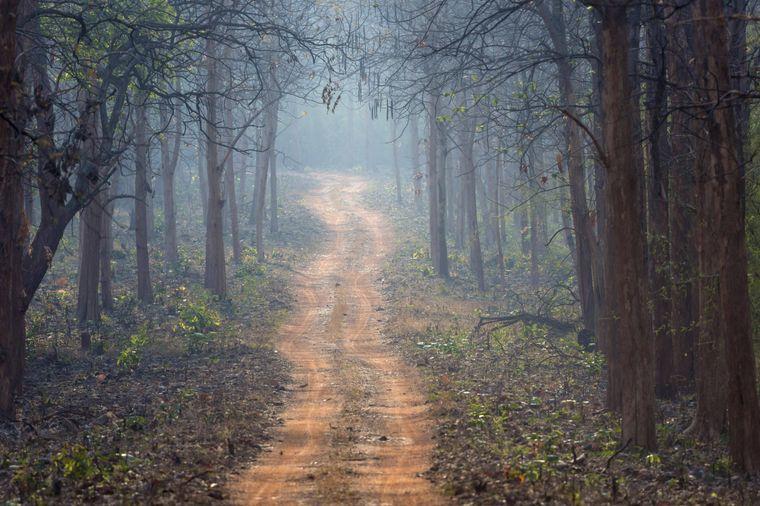 Als Besucher des Dowhill Forest im Norden Indiens soll man sich beobachtet fühlen.