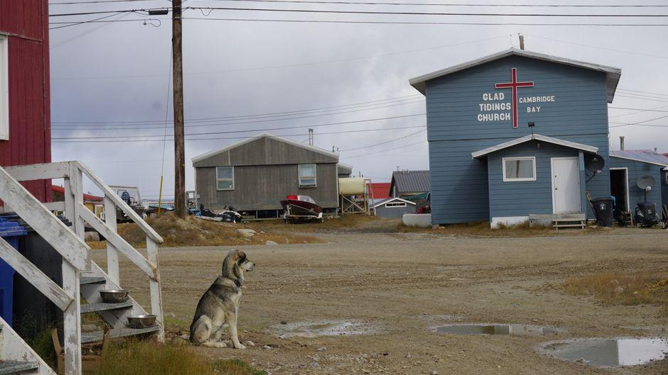 Hund und Kirche in Cambridge Bay.
