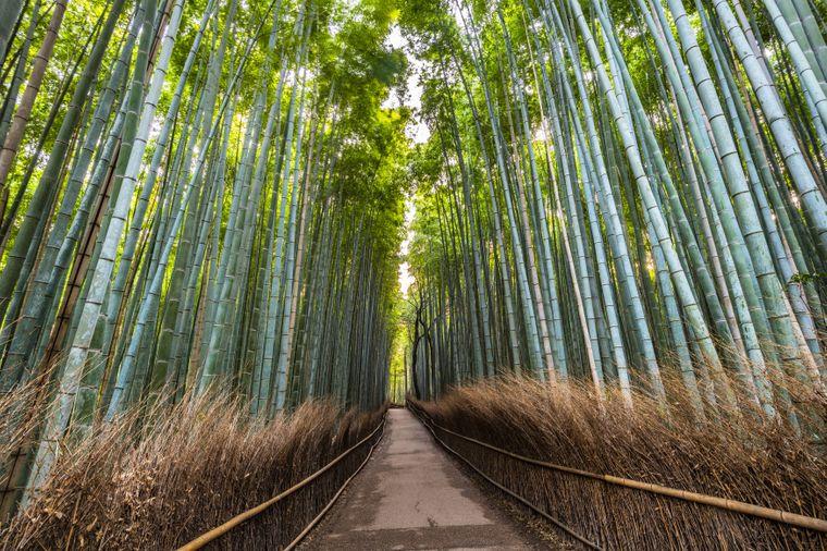 Arashiyama-Bambuswald, Kyoto, Japan.