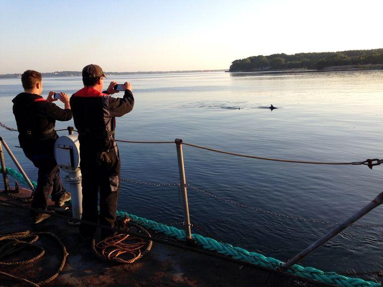 Manchmal kannst du auch Schweinwale vom Ufer aus sehen.