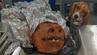 """Schnüffelhund Hardy aus der """"Beagle Brigade"""" entdeckte den Schweinekopf im Gepäck eines Fluggastes in Atlanta."""