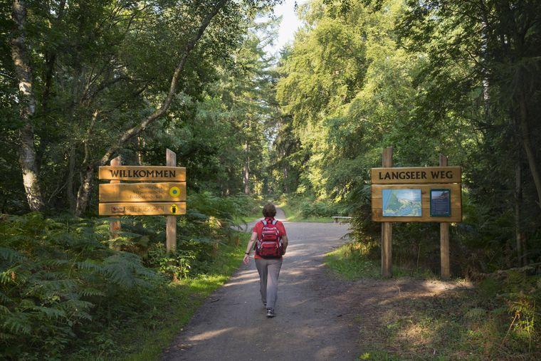 Rundweg durch den Darßwald auf Fischland-Darß-Zingst im Nationalpark Vorpommersche Boddenlandschaft.