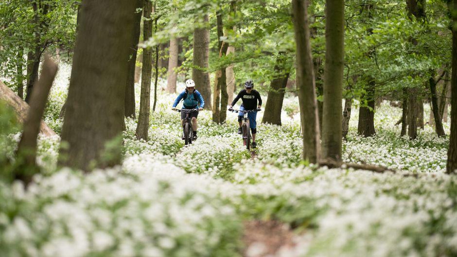 Weiter geht's: Im Wienerwald gibt es neue Strecken für Mountainbiker.