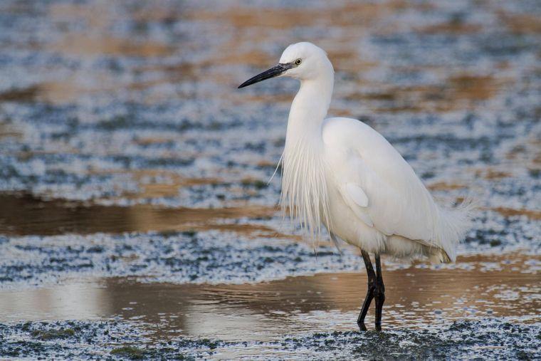 Im Parc Natural de s'Albufera kannst du eine artenreiche Tierwelt und tolle Natur bestaunen. Vor allem Vogel-Kenner können hier einige Exoten entdecken.