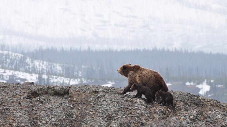 Der Yellowstone-Nationalpark ist zu jeder Jahreszeit eine Reise wert – aber besonders im Winter.