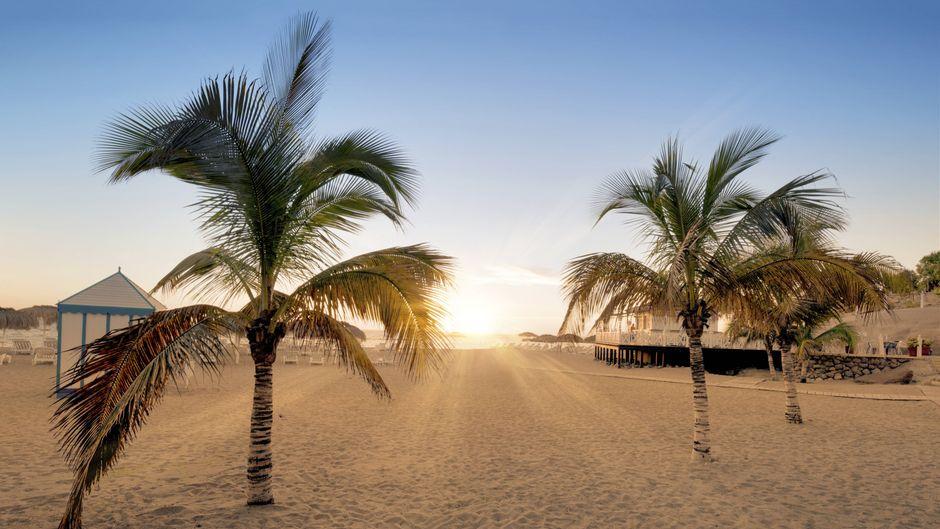 Ein leerer Strand mit Palmen auf der Insel Teneriffa in der Abendsonne