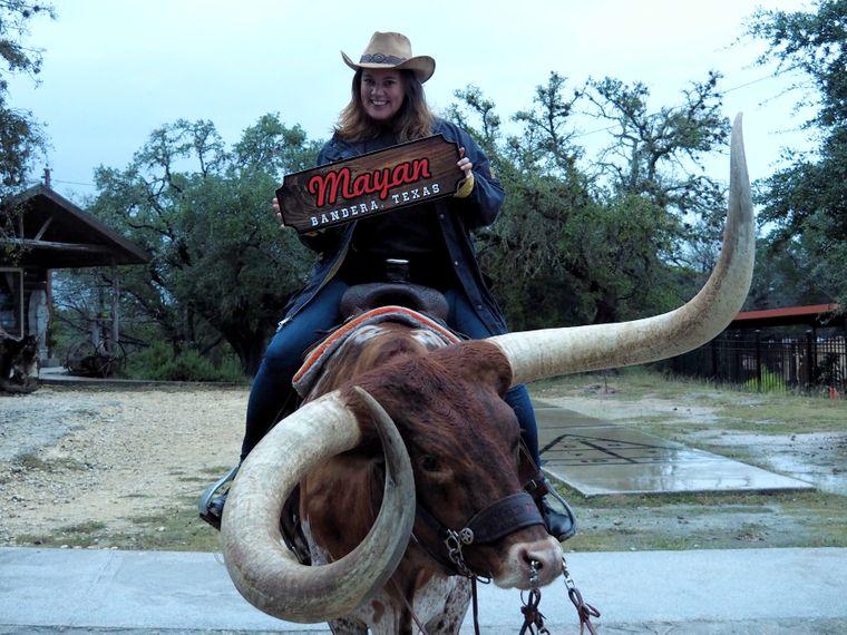 Longhorn-Rind auf der Mayan Ranch.