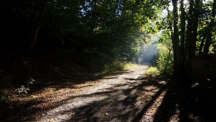 Das Licht bricht durch die Blätterdecke: Es ist herbstlich kühl, aber sonnig. Das Wetter bietet sich an für eine lange Wanderung.