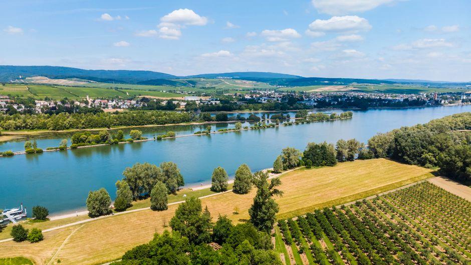 In Eltville am Rhein kommen Wein- und Sektliebhaber auf ihre Kosten.