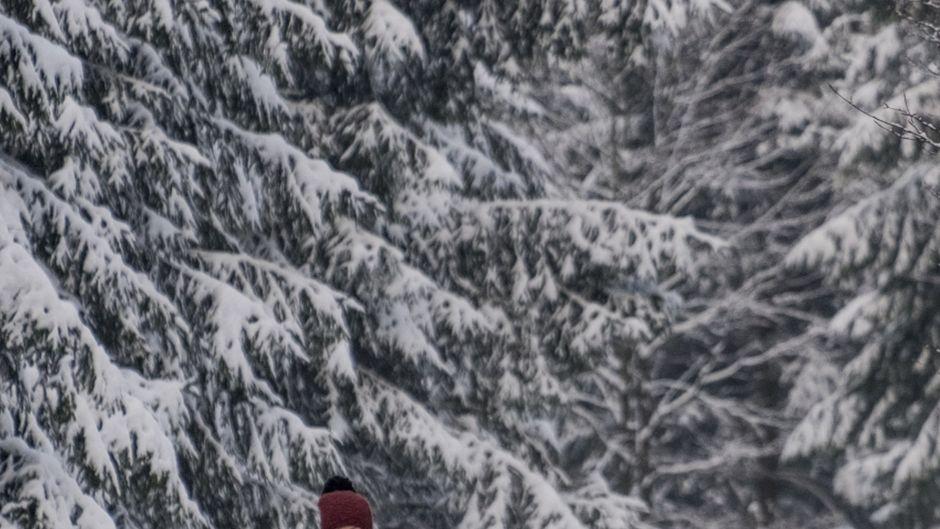 Bei einer Fahrt mit dem Hundeschlitten bei Tambach-Dietharz lässt sich die winterliche Landschaft des Thüringer Waldes auf ganz besondere Art erkunden.
