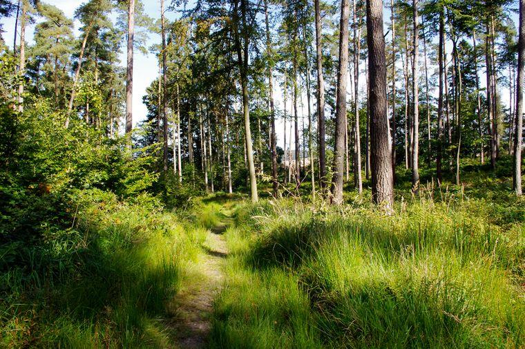 Ein Wald namens Kühlung: Von hier stammt der Name des Ortes.