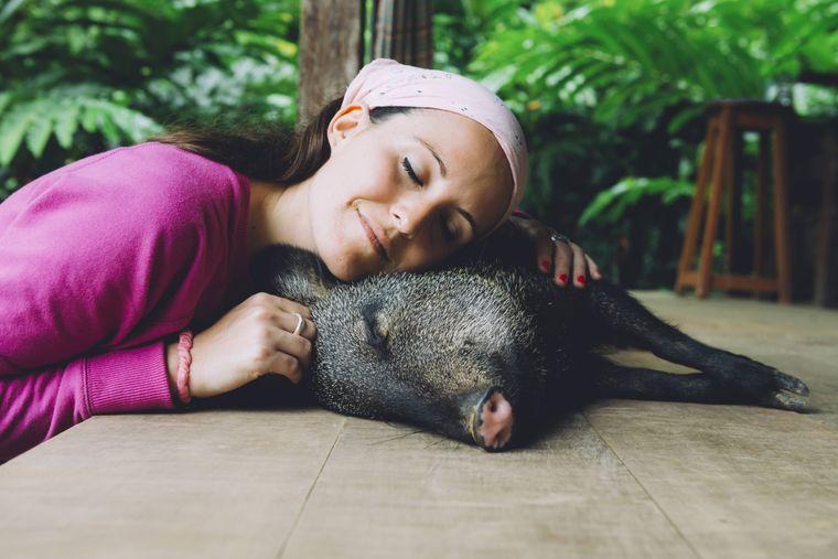 Schweine genießen zu Unrecht einen schlechten Ruf, sie sind eigentlich sehr reinliche Tiere.