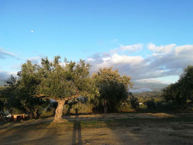 Richard und seine Freundin kümmern sich um die Olivenernte.