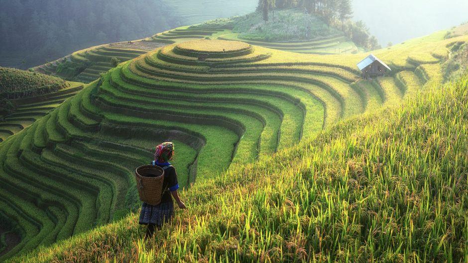 Grüne Geschichte: Die Reisterrassen von Banaue im nördlichen Hochland der Insel Luzon (Philippinen) sind bis zu 2.000 Jahre alt.
