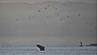 """Wal """"Welly"""" im Hafen von Wellington, Neuseeland."""