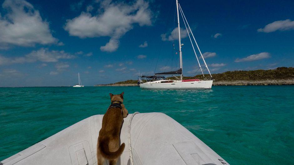 Katze Miss Rigby segelt um die Welt.