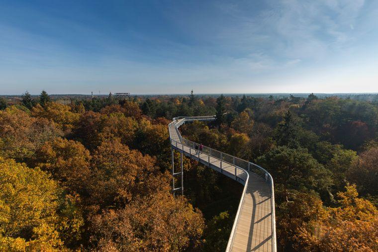 Vor über 100 Jahren entstanden hier die berühmten Beelitzer Heilstätten – heute wächst auf und um den Gebäudekomplex ein einzigartiger Wald.