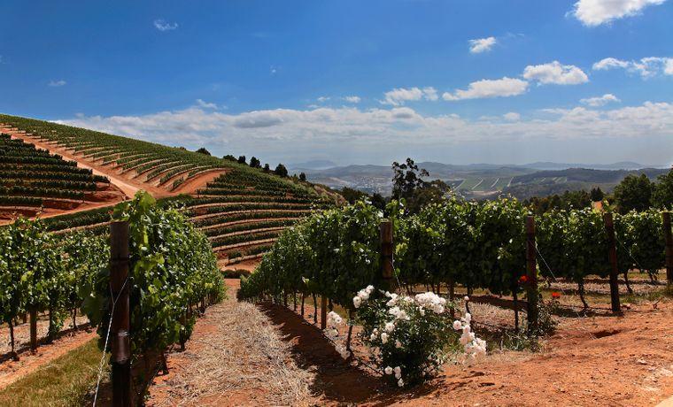 Beste Bedingungen: Die Winelands bieten ein besonderes Klima für Chardonnay, Pinotage und Co.
