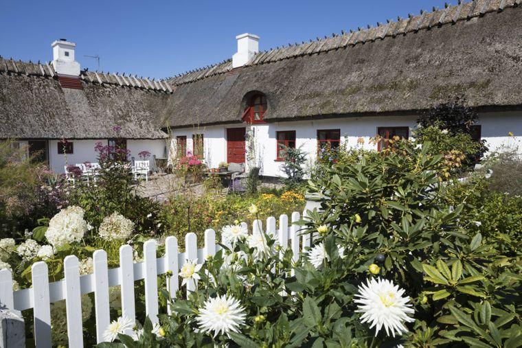 Weißes dänisches Haus mit Reetdach und großzügigem Garten.