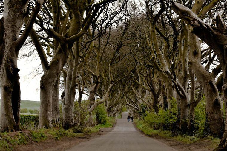 """Die Bregagh Road in Irland: Bekannt aus der Serie """"Game of Thrones""""."""