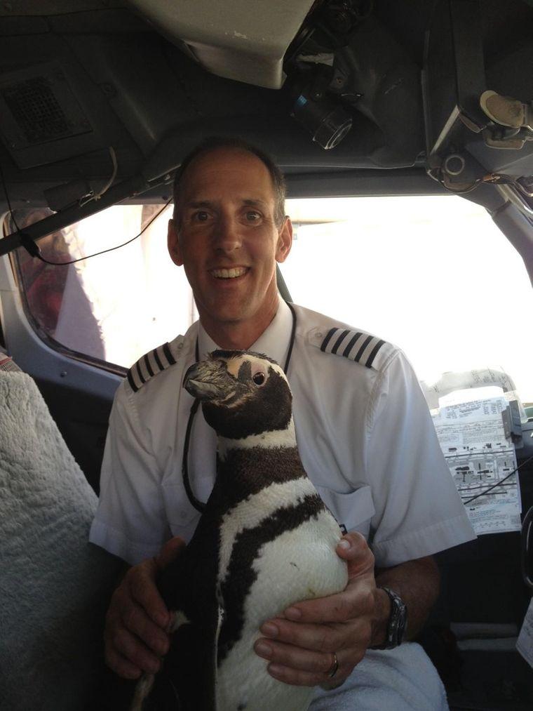 Pinguin im Cockpit bei einem Piloten.