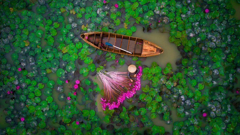 Ein Mensch schwimmt im Mekong Delta zwischen einem Holzboot und Seerosen.