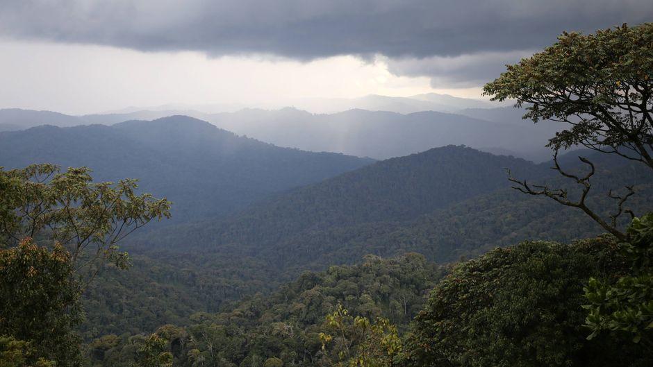 Das Auswärtige Amt warnt vor Reisen in den Nyungwe-Nationalpark in Ruanda.