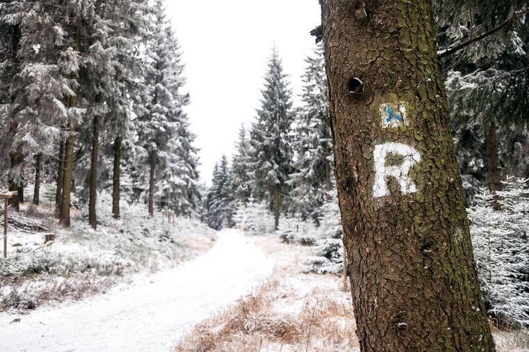 Ein Baum mit dem typischen R-Zeichen für den Wanderweg Rennsteig in Thüringen.