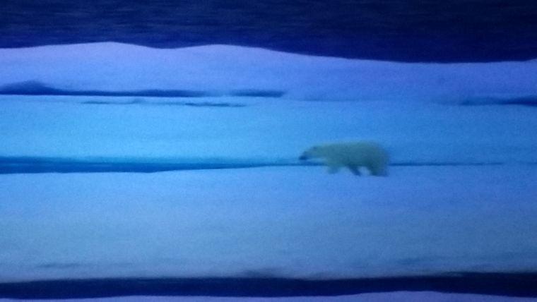 Ein Eisbär in der Arktis