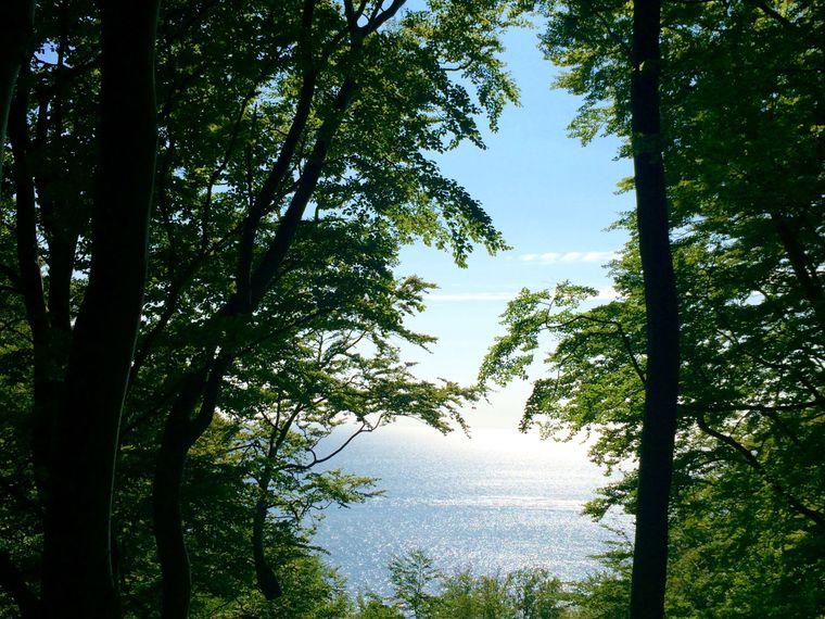 Im Buchen-Urwald von Møns Klint wird einem die wahrhaftige Gewalt und Schönheit der Natur bewusst.