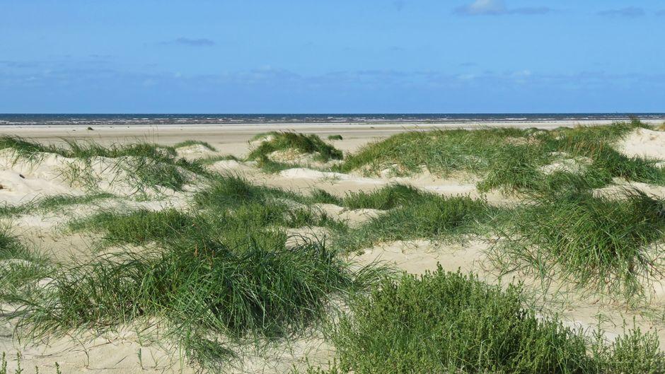 Dünen und Strand auf Fanø.