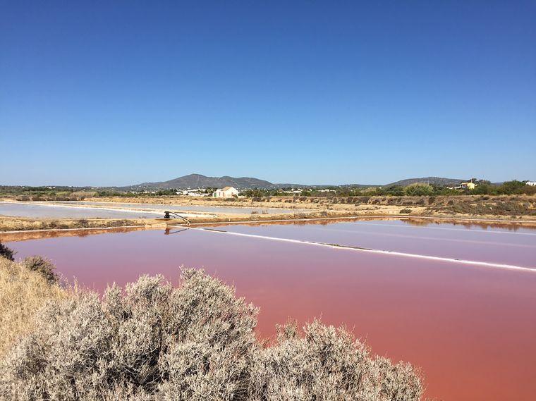In Salinen an der Ostalgarve wie der Saline Sal Marim im Castro Marim wird Salz geschöpft .