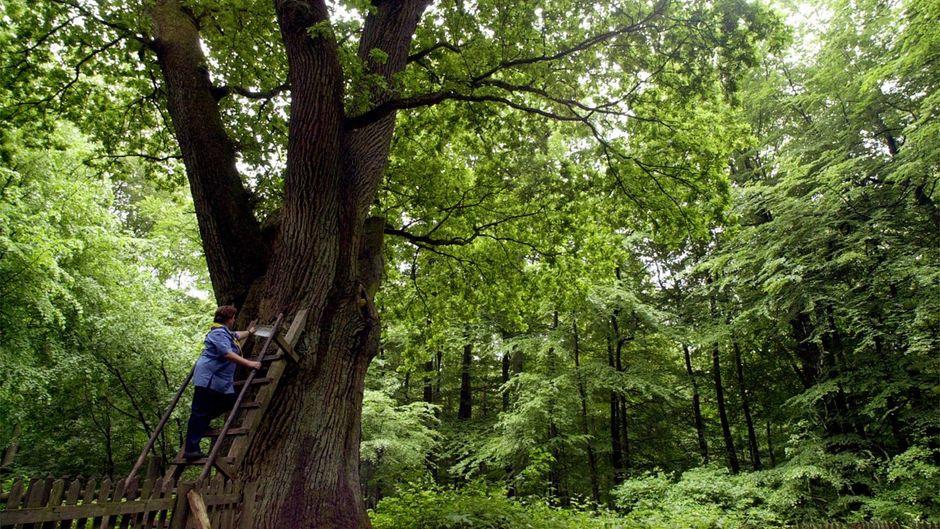Eine Postzustellerin liefert Briefe an die Bräutigamseiche im Dodauer Forst bei Eutin aus.