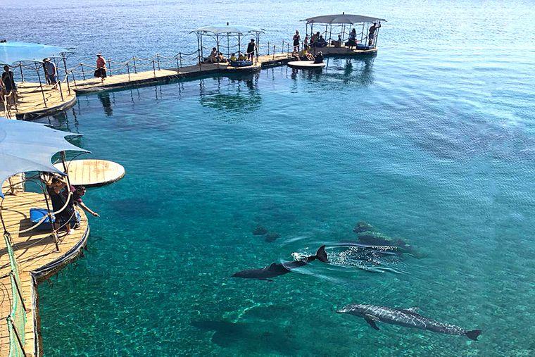 Delfine gesellen sich freiwillig zu den Menschen am Dolphin Reef.
