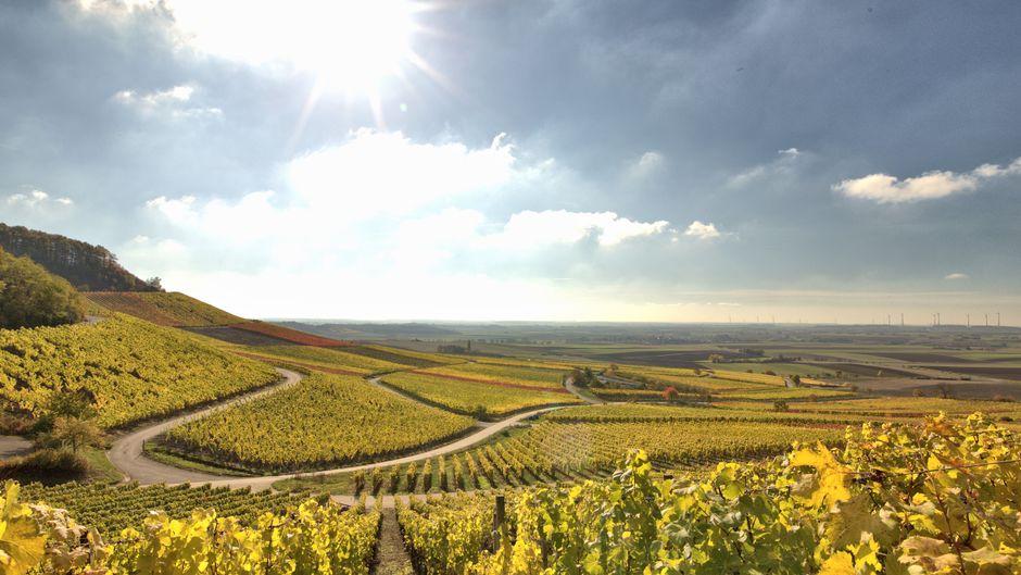 Der Weinparadiesweg in Franken führt vom Kapellberg bei Weigenheim bis nach Nenzenheim.